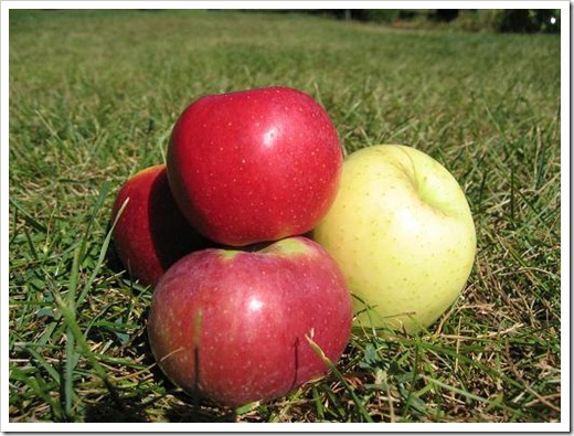 apples are not genetically modified