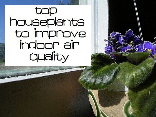 Monday mission get some air filtering plants kitchen for Best air filtering houseplants
