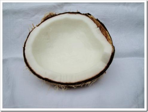 Coconut (13) (475x356)