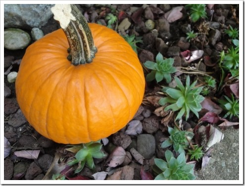 20 Ways to use that Random Half Cup of Pumpkin