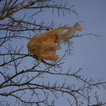Food for Thought:  Plastic Bag Debacle