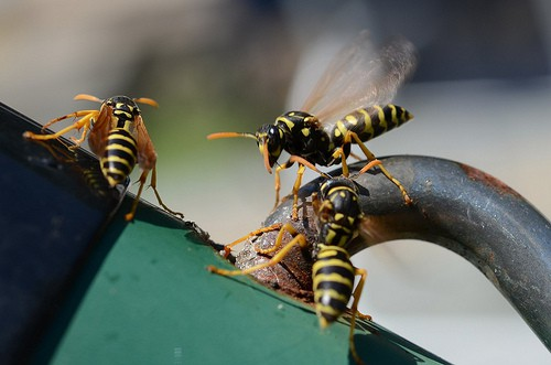 The best way to get rid of wasps and bees.