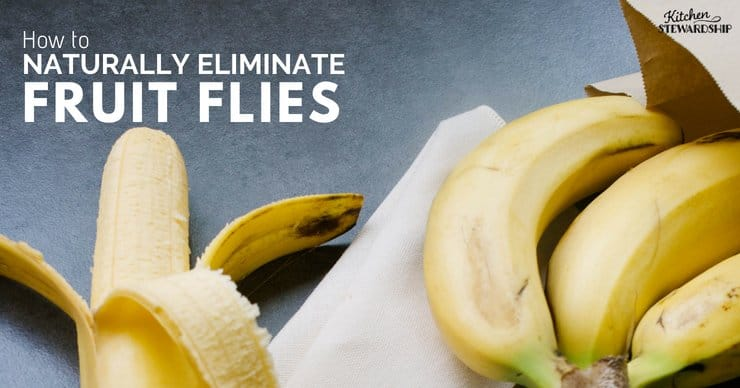 Bananas on a tabletop - Naturally Kill Fruit Flies