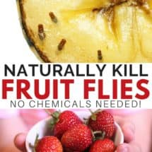 Kill Fruit Flies Naturally – No Chemicals!