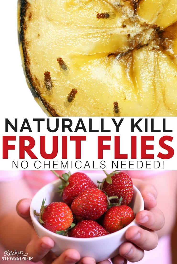 Kill fruit flies naturally