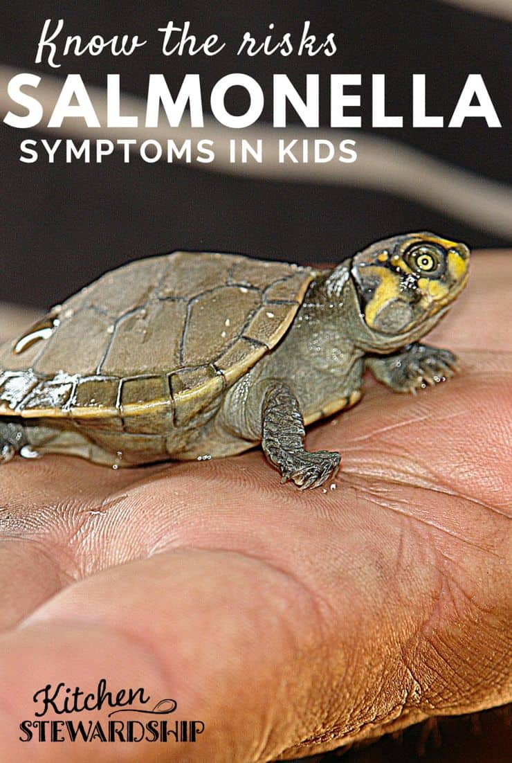 Risks of Turtles and Salmonella Symptoms in Kids