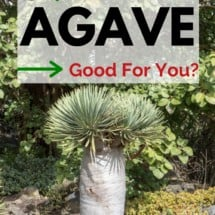 Agave and Stevia: All Natural, Unsafe, or Unhealthy?