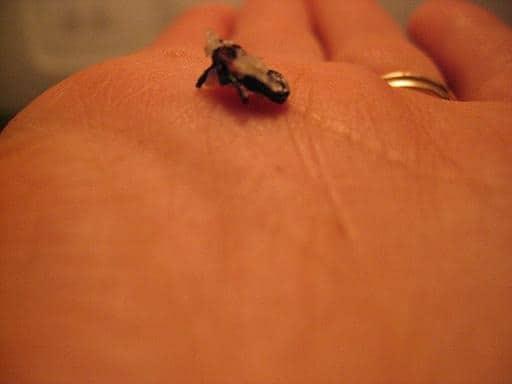 salt bug (3)