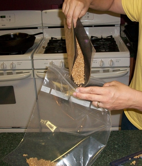 How to store sprouted whole wheat grains