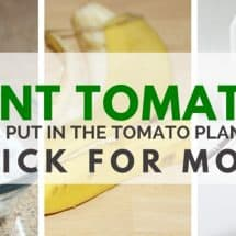 How to Plant Tomatoes: 8 Things I Put in the Tomato Planting Hole