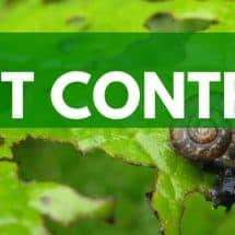 Organic Gardening Series: Natural Pest Control
