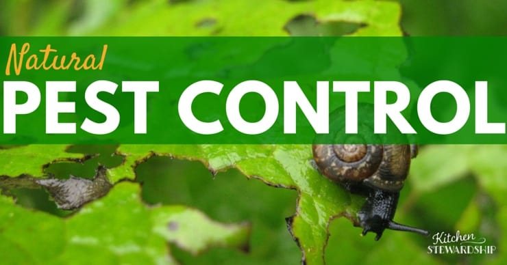 Facebook Organic Gardening Series Natural Pest Control