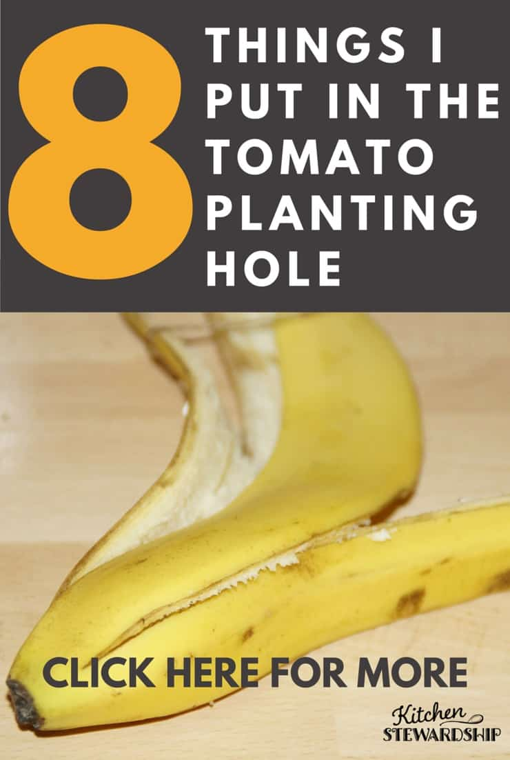 How to add everything from fish to bananas to a blight buster tonic in the hole when you plant your tomatoes this year, and enjoy superb growing results!