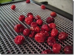 excalibur dehydrator dried cranberries