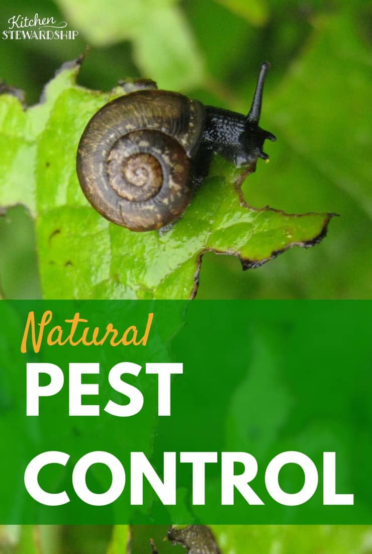 Natural Ways To Control Pests In Your Organic Garden