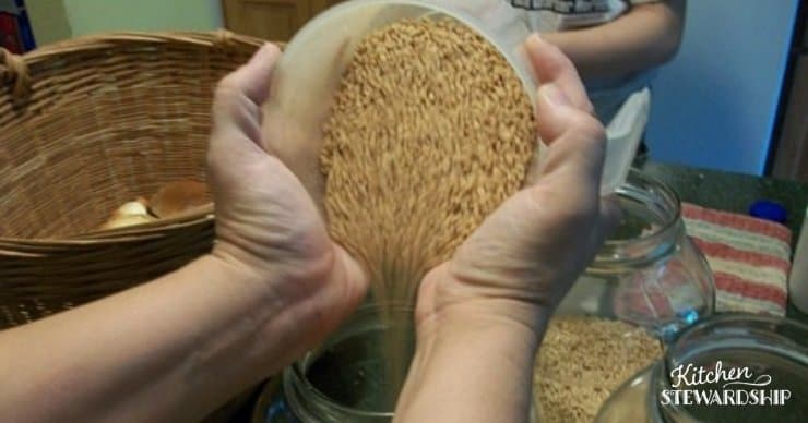 Using a dehydrator, you can soak and sprout whole wheat berries, dehydrate them, then grind into sprouted flour for quick bread with reduced phytic acid. #realfood