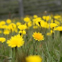 Organic Gardening: Natural Weed Control