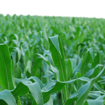 Organic Gardening Series: Genetically Modified Seeds
