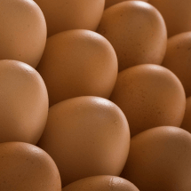 Egg Carton Labels:  What's in a Name?