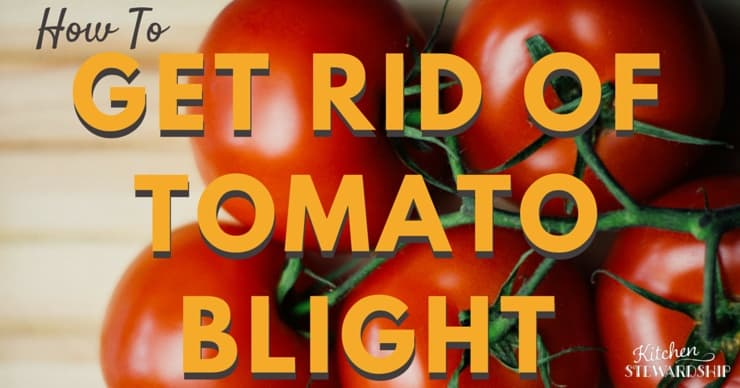 How to get rid of tomato blight and prevent blight next year - use these simple ways!