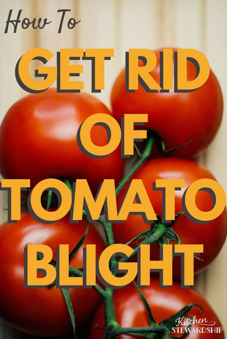 Simple and natural uses for getting rid of tomato blight