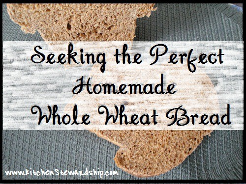 Seeking the Perfect Homemade Bread