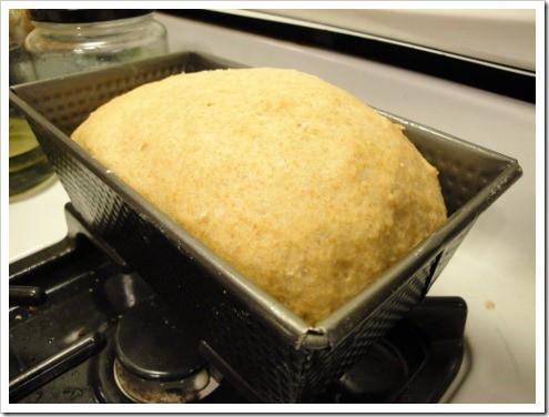 Bread Machine Whole Wheat Dinner Rolls