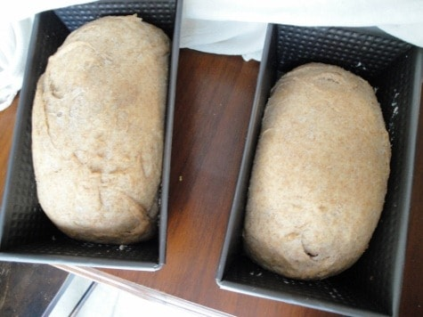 nourishing traditions soaked yeasted buttermilk bread (13) (475x356)
