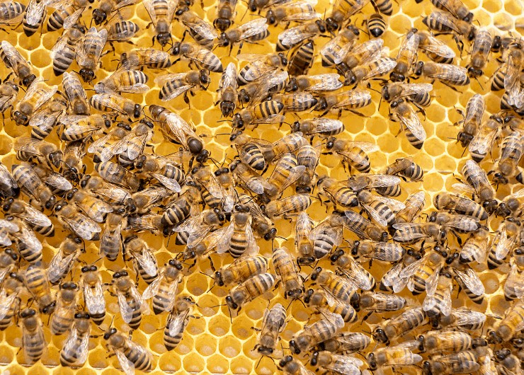 bees on their honey comb