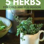 Feeling sick? Use these top 5 herbs for cold and flu season.