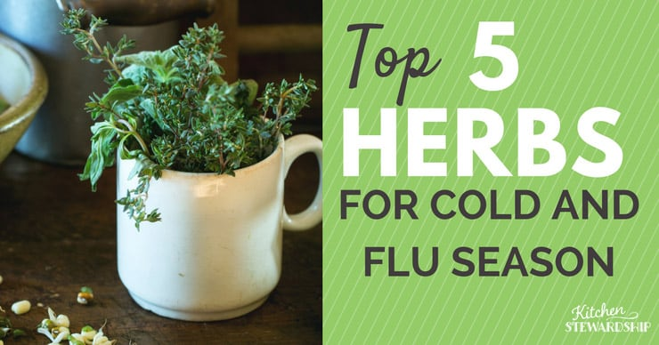 Need to strengthen your immune system and feel better? Use these top 5 herbs for cold and flu season.