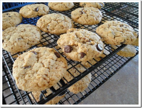 grain-free almond flour chocolate chip cookies (2) (475x356)