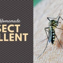 Homemade Natural Insect Repellent Options