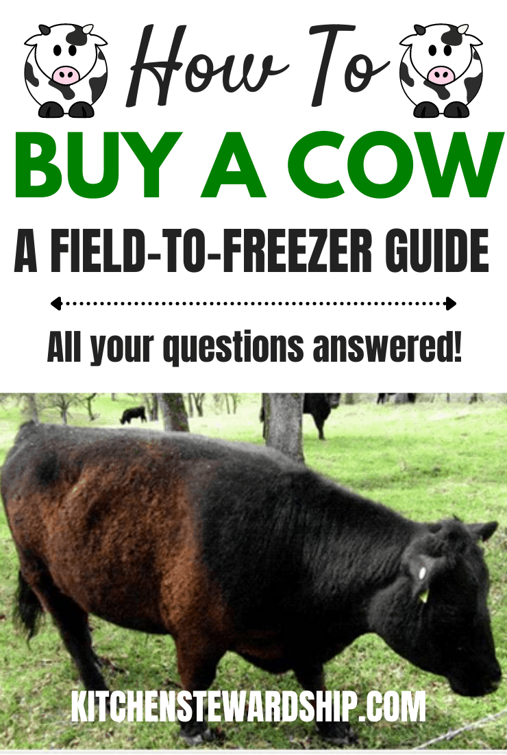 how to buy a cow - a field to freezer guide - all your questions answered