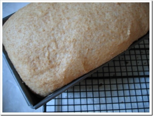 Sandra's Bread (1) (500x375)