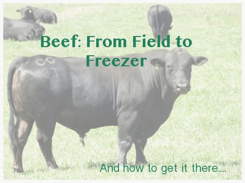 Beef: From Field to Freezer :: via Kitchen Stewardship
