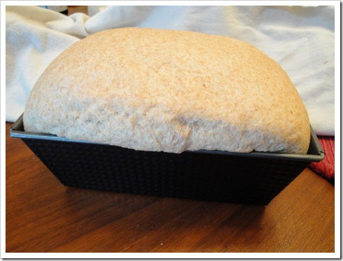 King Arhur's whole wheat sandwich bread (3) (475x356)