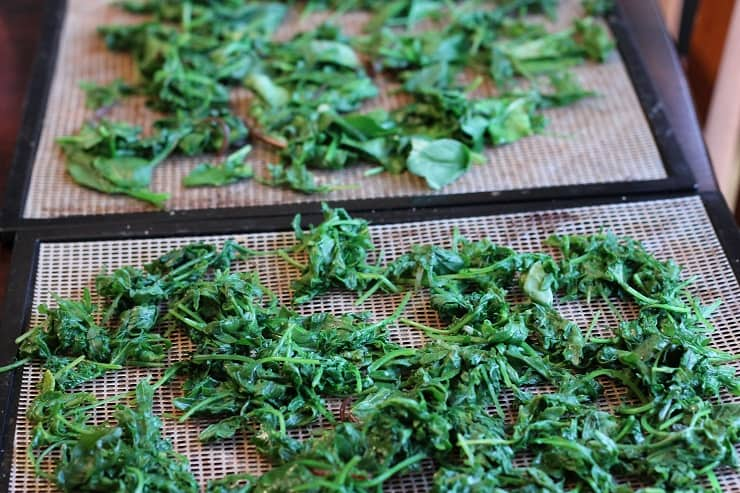 steamed kale swiss card spinach greens on dehydrator tray ready to go