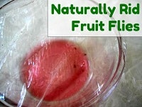 Naturally Catch Fruit Flies