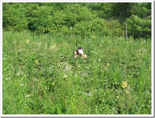 strawberry picking 2010 (5)