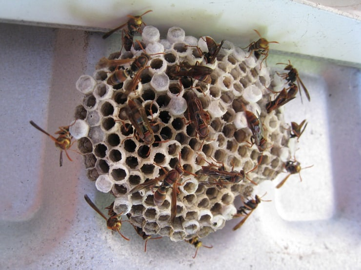 You don't need Raid or yucky chemicals to kill wasps and bees that are too close to your house. Get rid of wasps without chemicals with this super simple natural spray recipe.