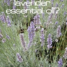 Is Lavender Just a Pretty Smell or Something More?