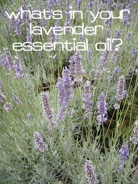 lavender essential oil purity