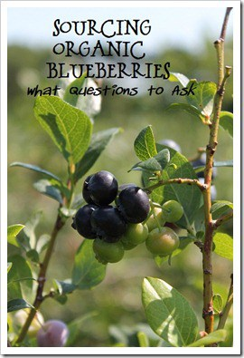Organic Blueberries U pick Grand Rapids MI