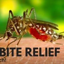 Get the Itch Out (Natural Bug Bite Relief Options)