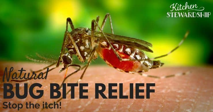 Natural Bug Bite Relief Stop the Itch