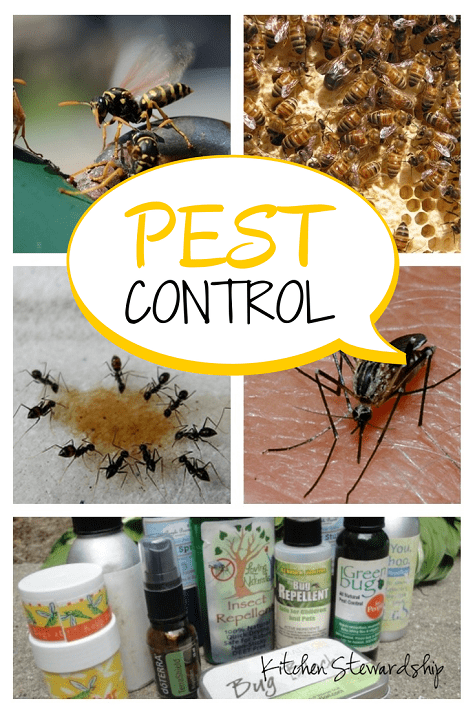 Natural Pest Control (Inside and Out!) :: via Kitchen Stewardship