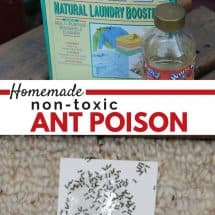 Homemade Non-Toxic Ant Poison {VIDEO}