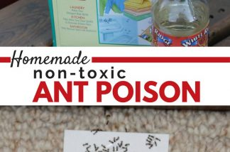 Got ants in the kitchen? This mostly natural, non-toxic homemade ant poison is your new best friend. Kill those sugar ants without hurting your family.