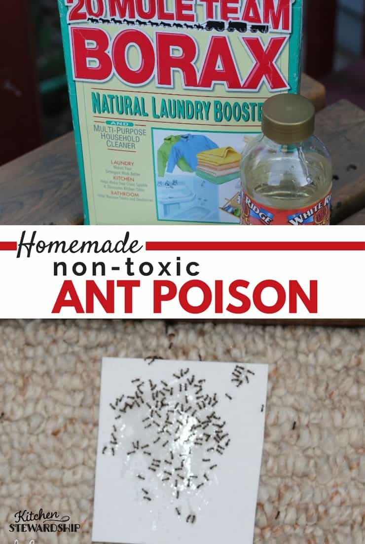 Got Ants In The Kitchen? This Mostly Natural, Non Toxic Homemade Ant Poison